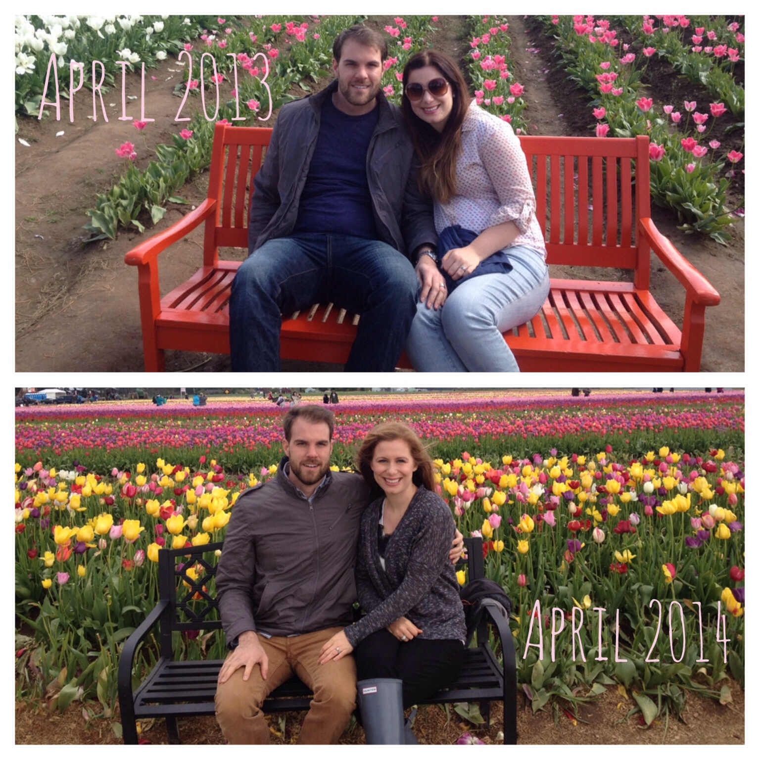 Woodburn Tulip Festival--what a difference a year can make!