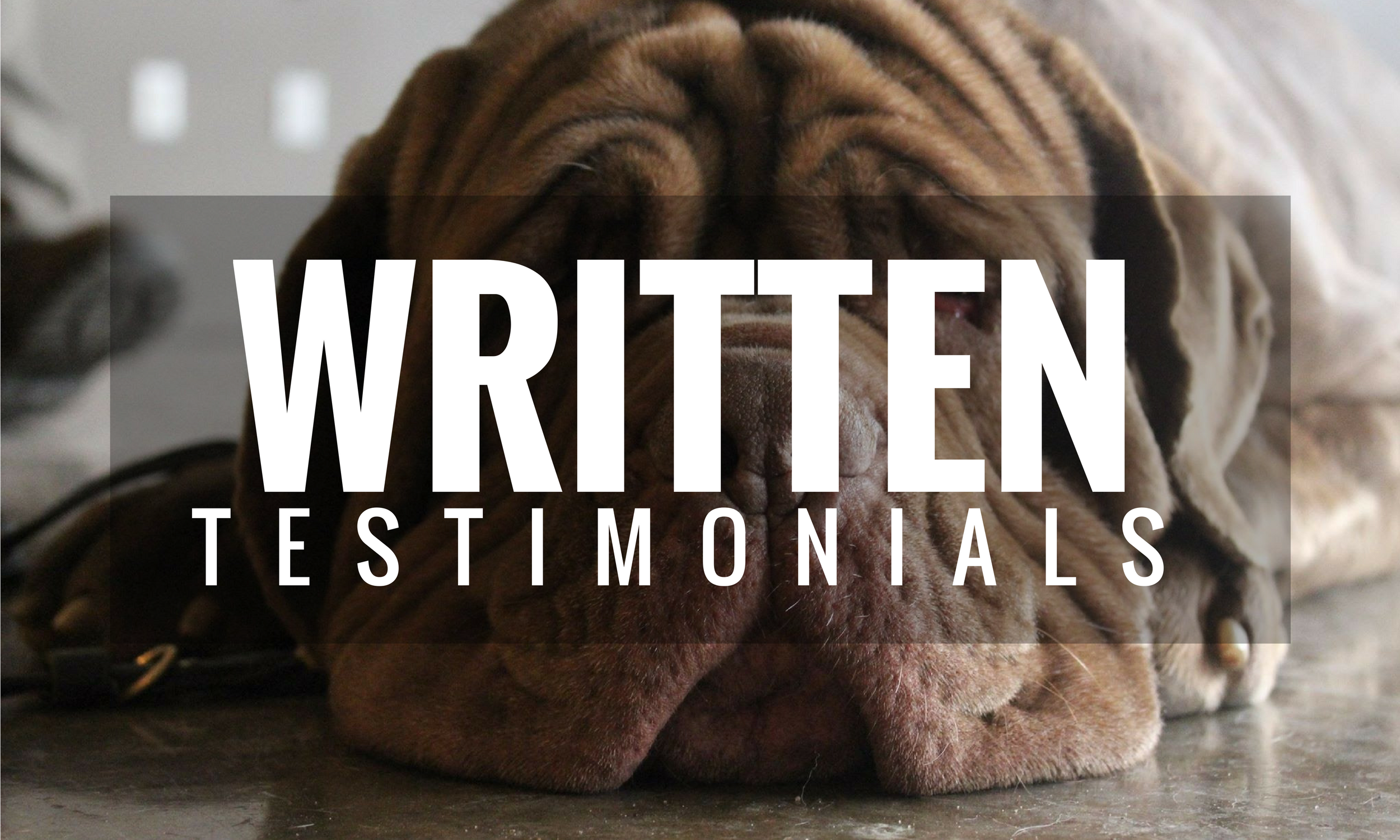written dog training testimonials