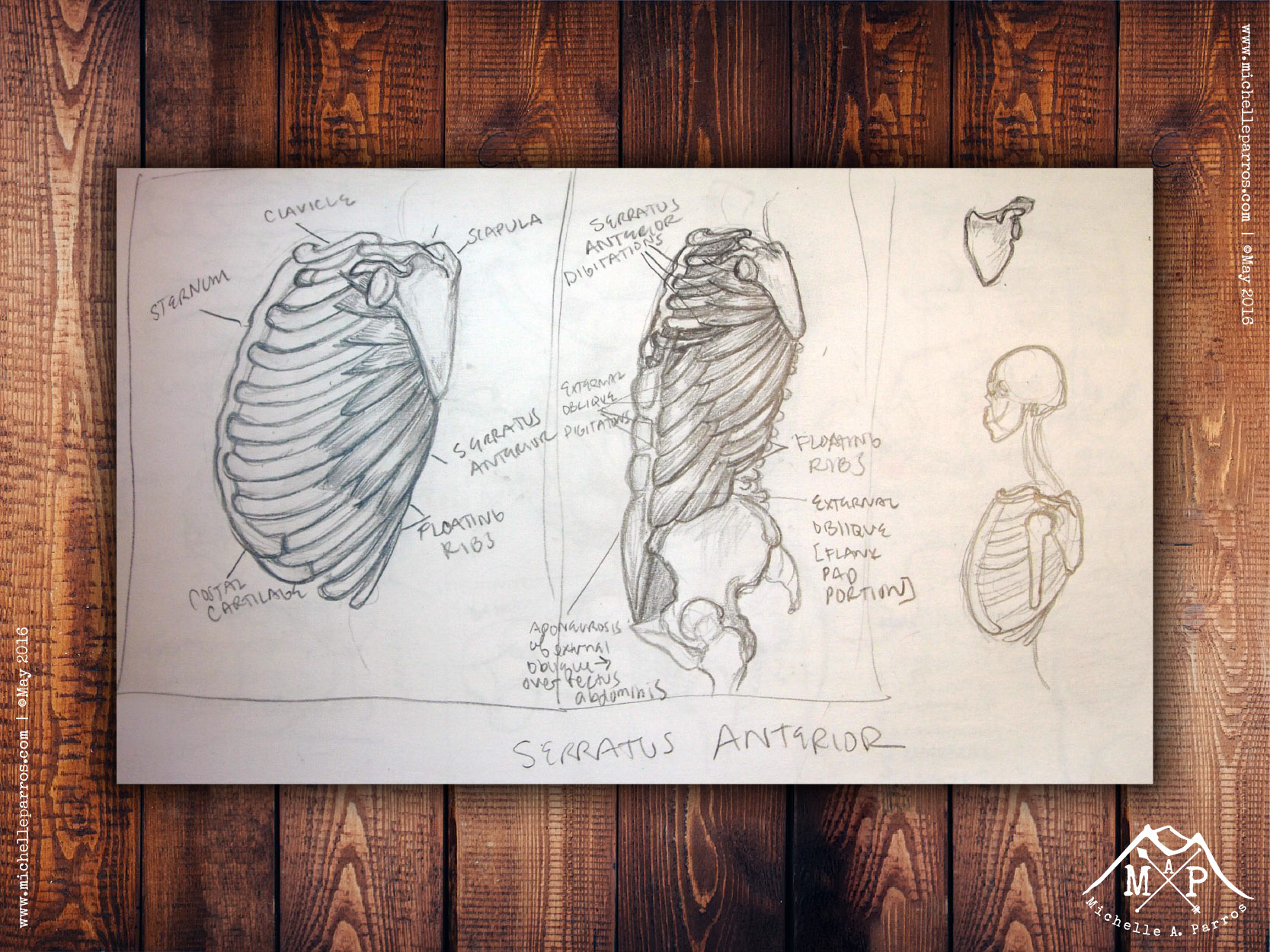 My study-sketch from   Classic Human Anatomy  by Valerie L. Winslow