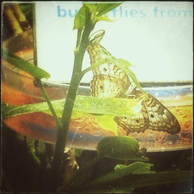 Butterflies!!! #butterfly #nature