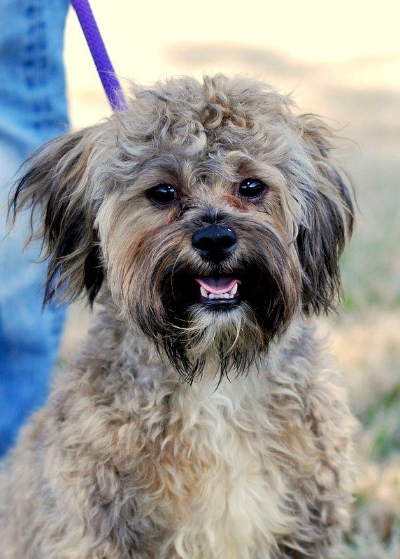 Portrait of Bear (formerly Giles) via his  Petfinder Listing .