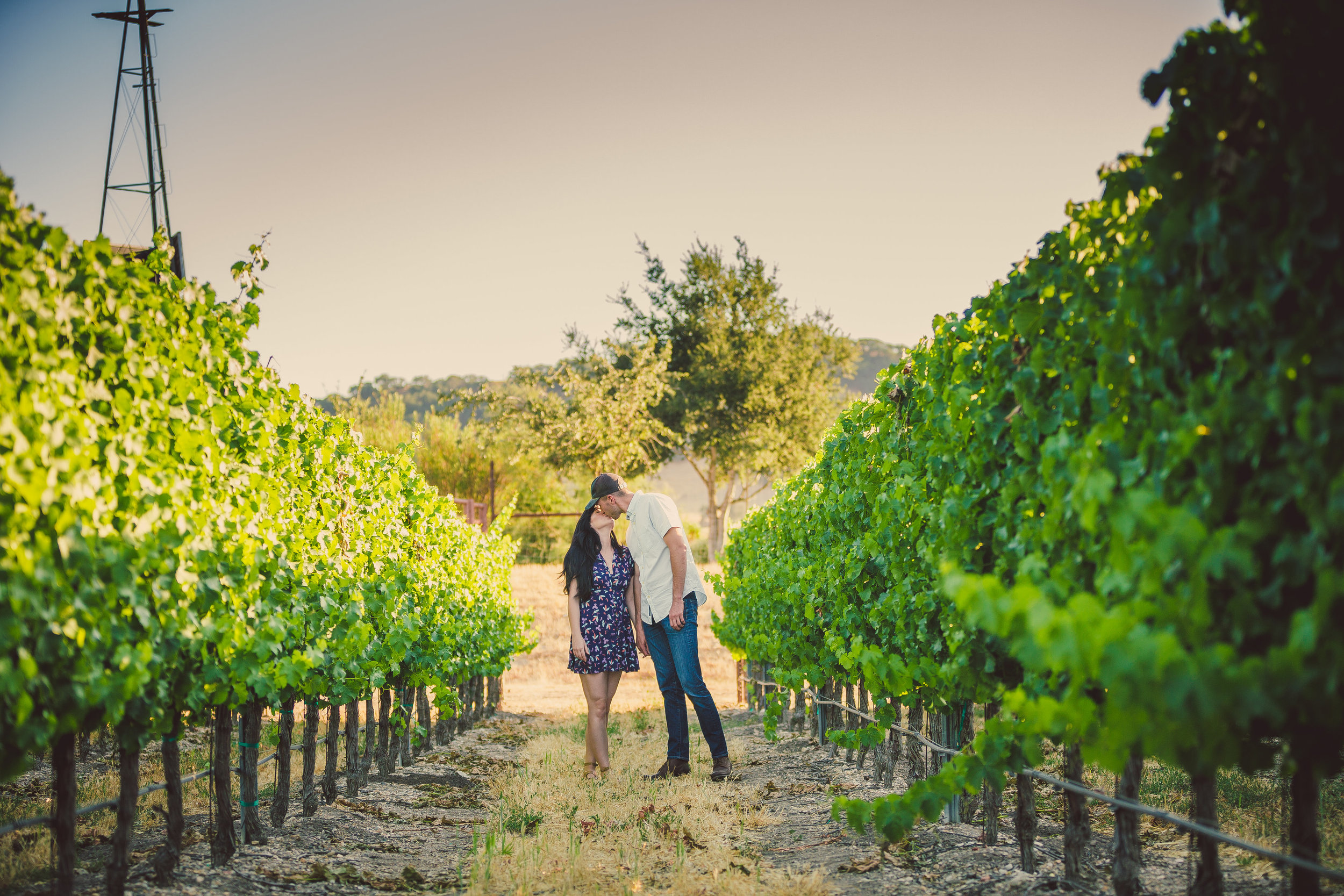 Sarloos Vineyard, Santa Ynez, CA