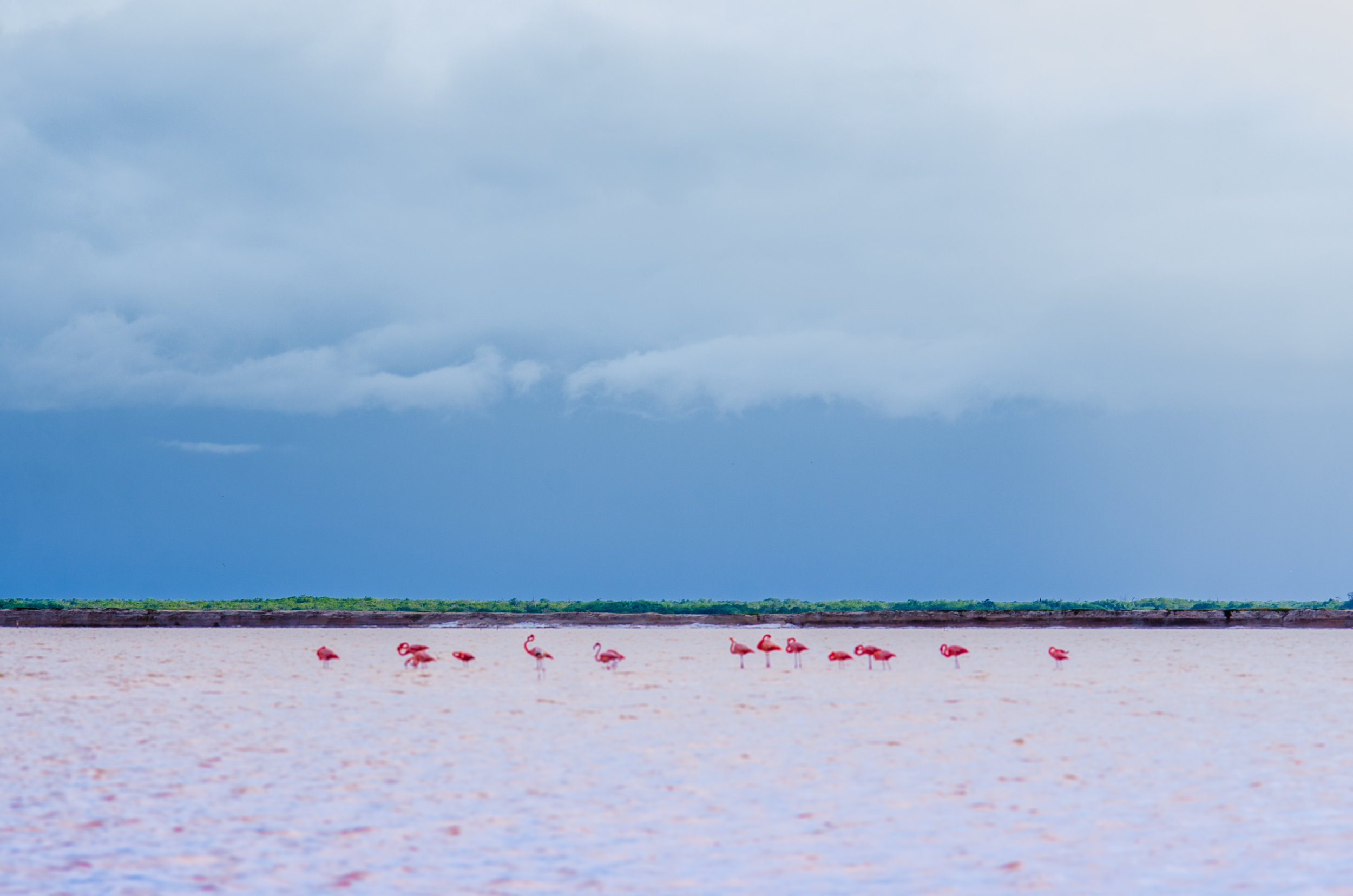pink flamingos & pink lake