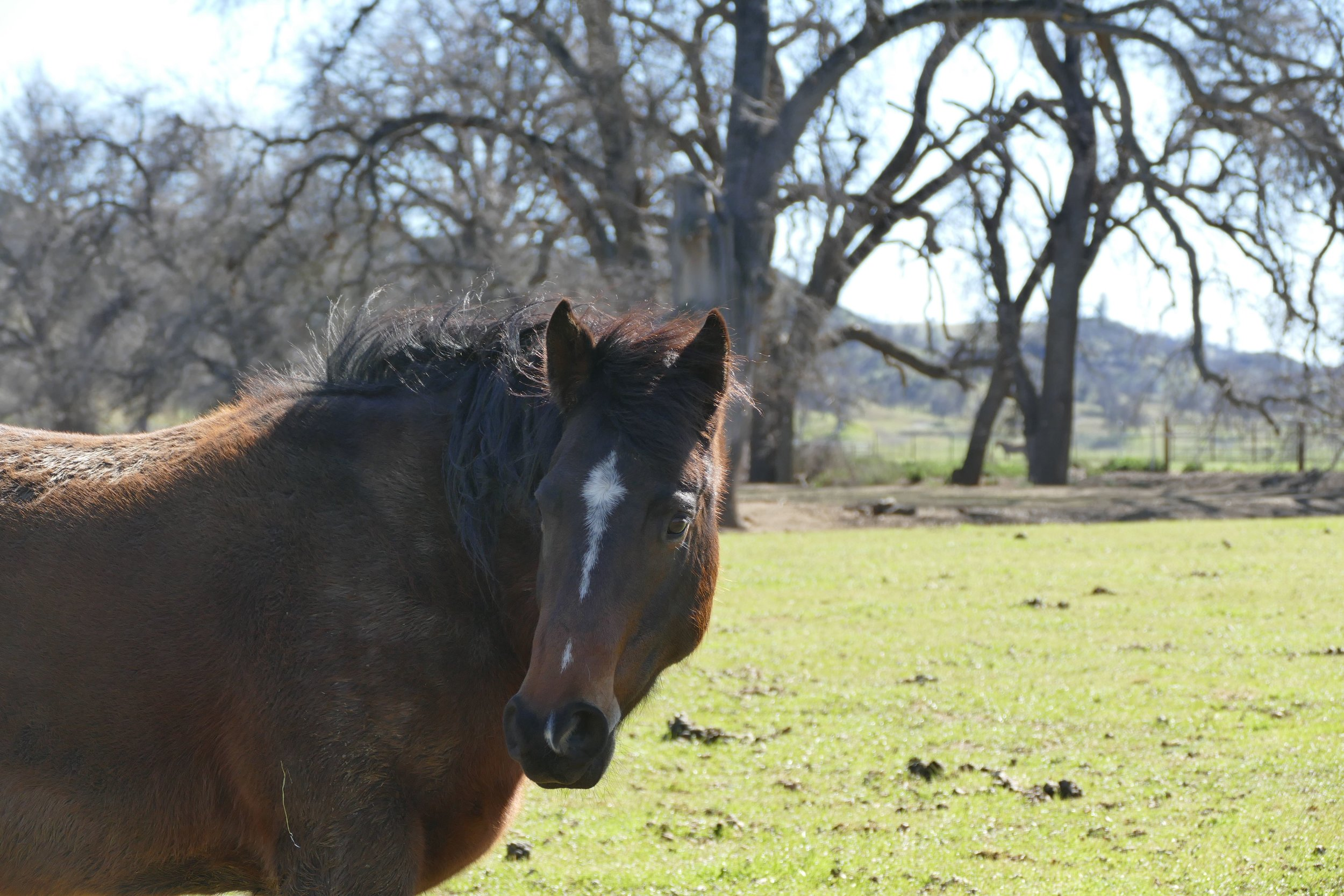 Annie, lead mare