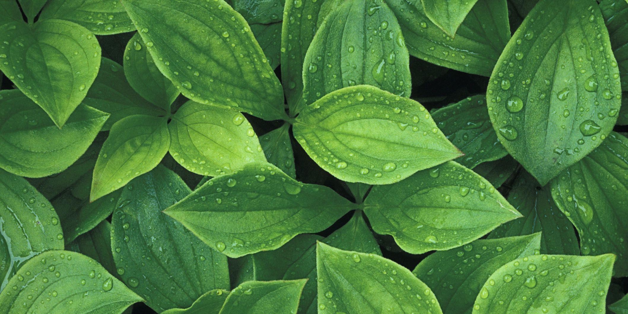 1439490128-plants.jpg