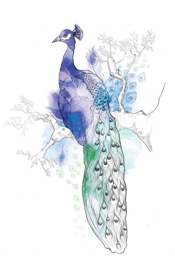 willagebbie_birds_peacock.jpg