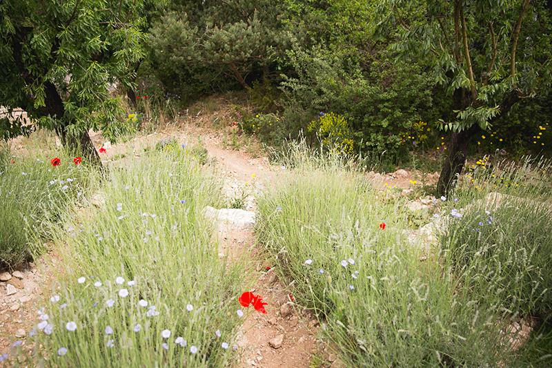 L'Occitane garden at the Chelsea Flower Show 2016