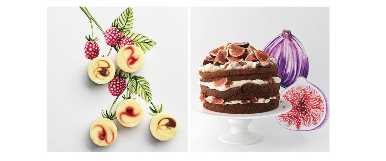 Illustration and photography collaboration by Willa Gebbie for M&S