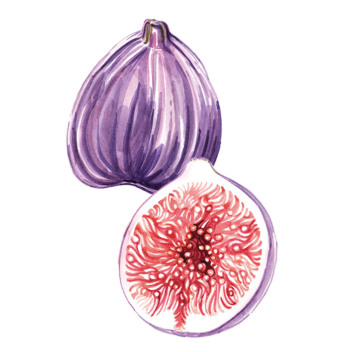 Willa Gebbie watercolour fig food illustration for M&S, photography collaboration.