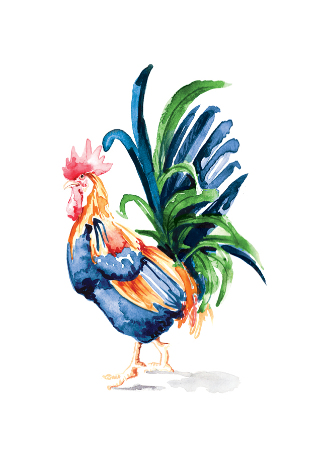 rooster illustration watercolour_ willa gebbie