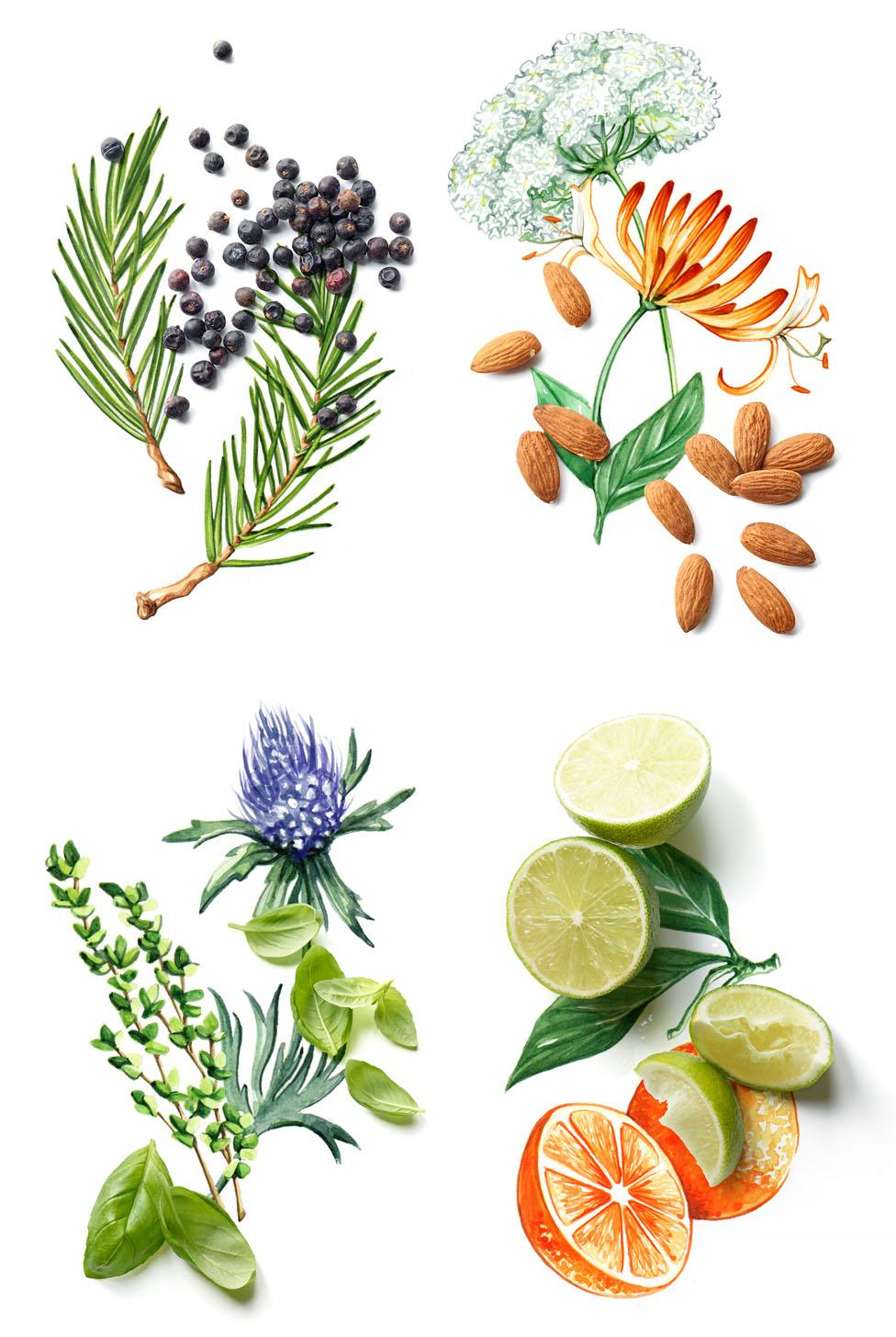 Food illustration, botanical illustration, photography collaboration for Waitrose