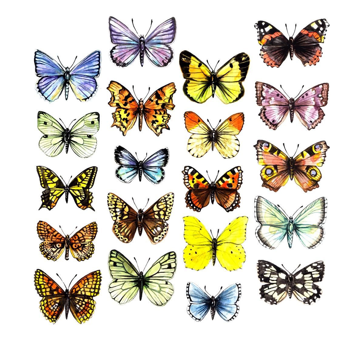 Watercolour illustration - butterflies
