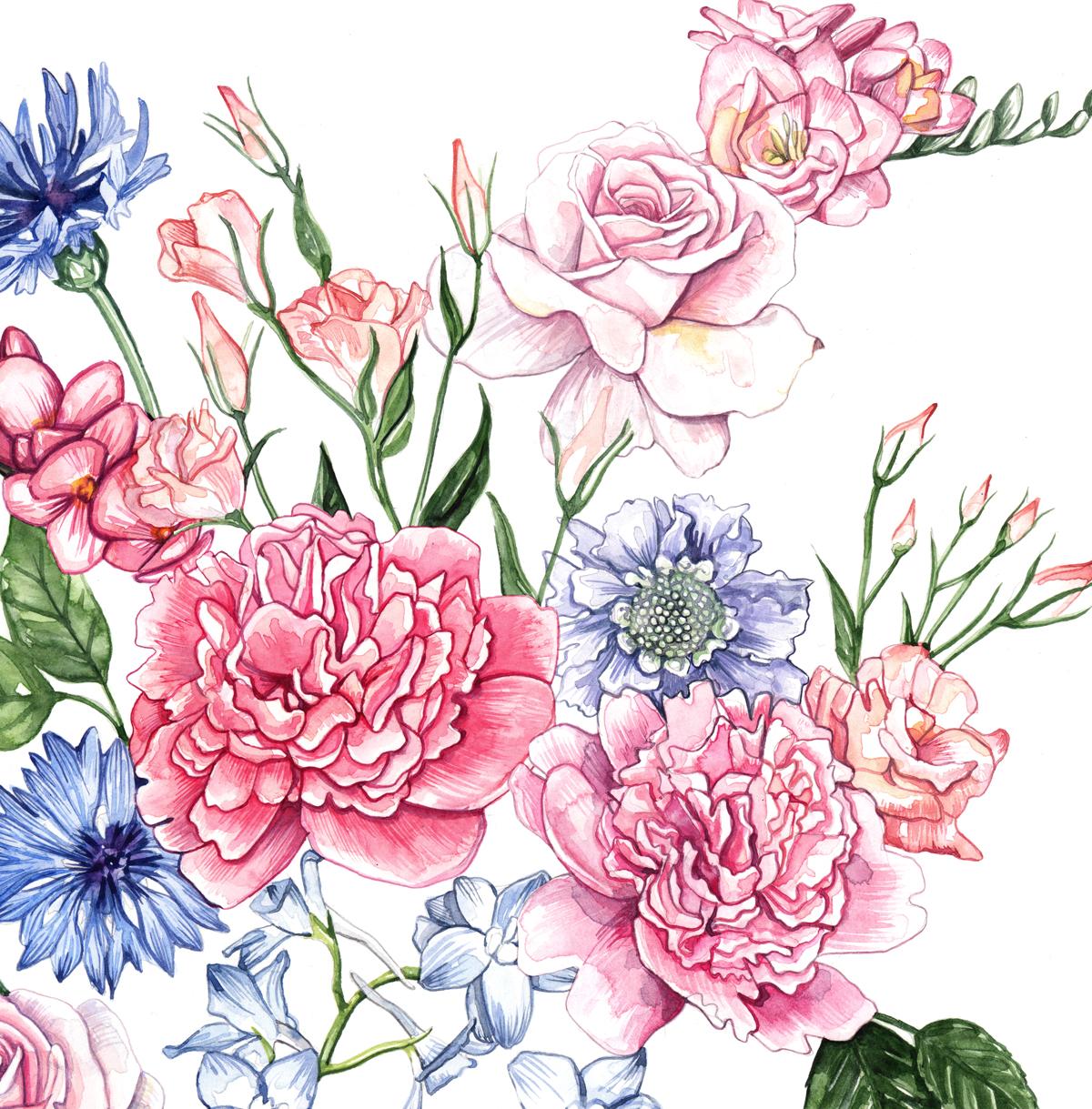 Floral, Flower, Botanical illustration Watercolour Illustration