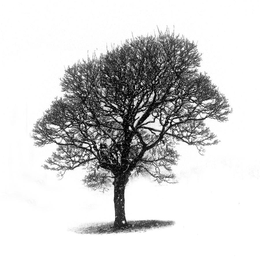 lonely tree1-s.jpg