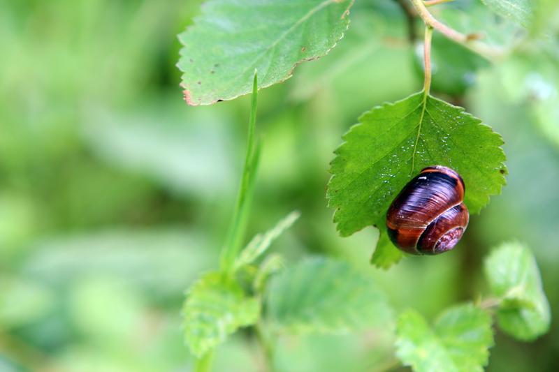 snail .jpg