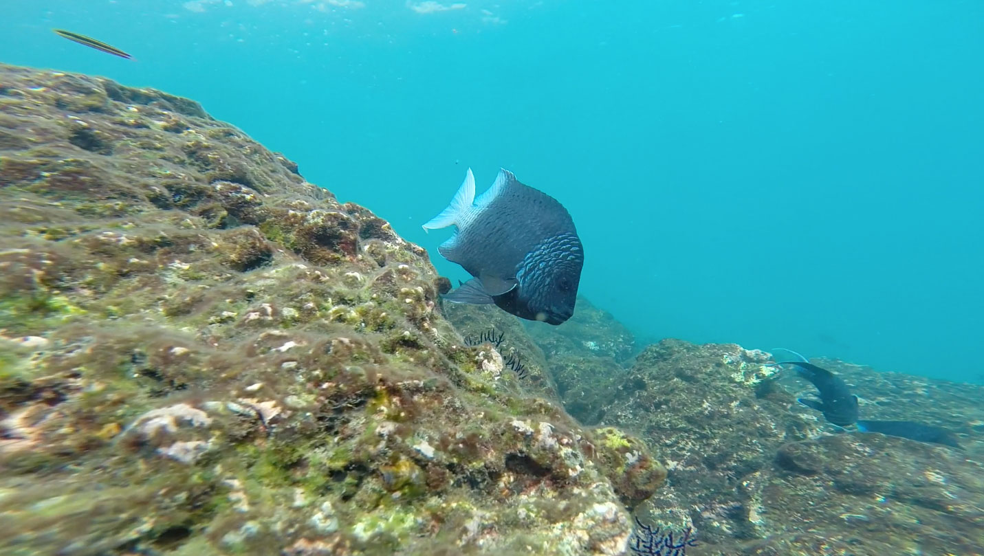 snorkeling-with-angel-fish.jpg