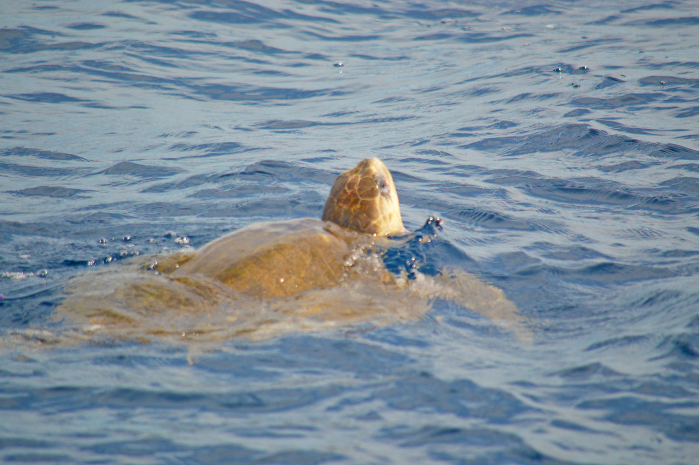 sea-trurtle-on-the-way.jpg