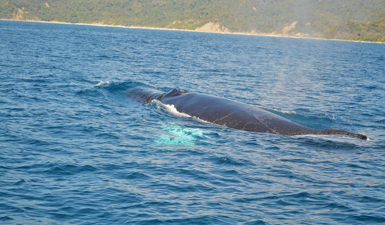 whale-watching-off-the-mal-pais-coast.jpg