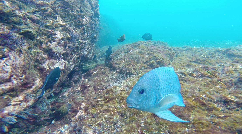 blue-fish-says-hi.jpg
