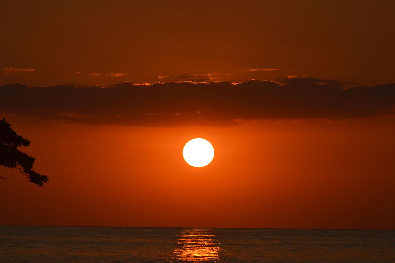 coyote-sunset-cr.jpg