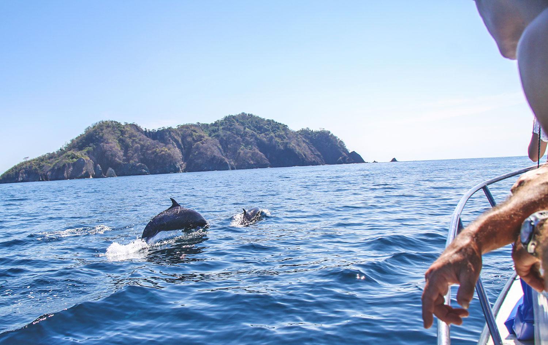 dolphins-mal-pais-costa-rica.jpg