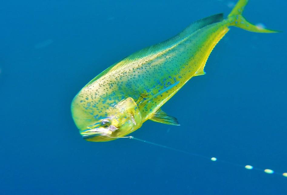 santa-teresa-fishing-tours.jpg