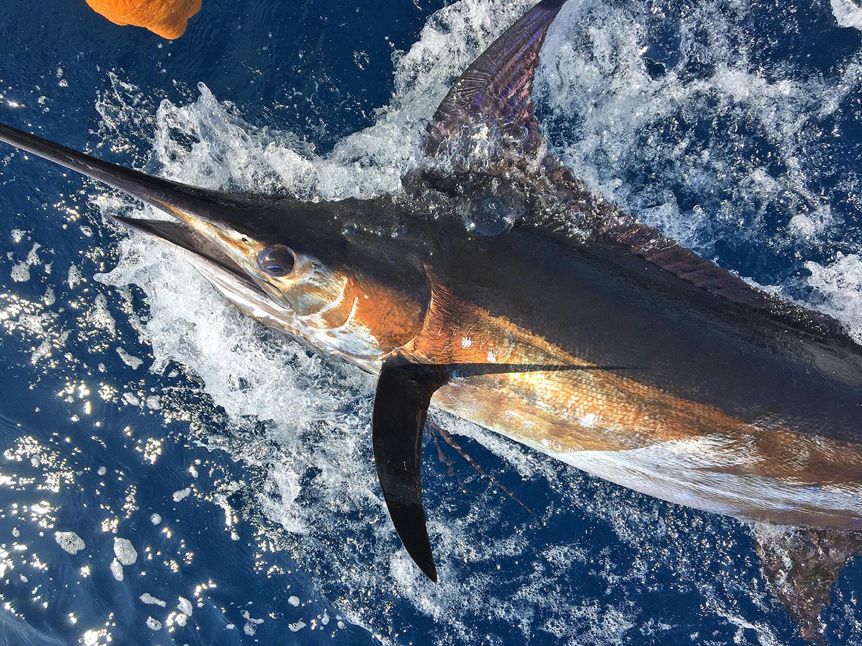 blue-marlin-deep-sea-fishing-mal-pais-costa-rica.jpg