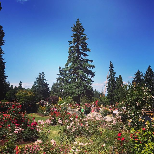 Beautiful day at the International Rose Test Garden & Japanese Garden #portland #oregon #japanesegarden #roses #internationalrosetestgarden #washingtonpark