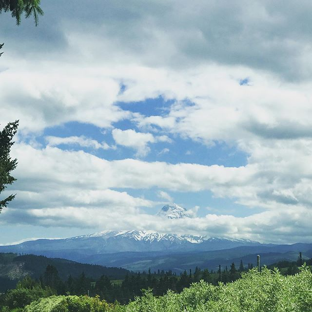 Amazing views from our next stop. Complete with #mounthood and #oscarthecat #oregon #bedandbreakfast