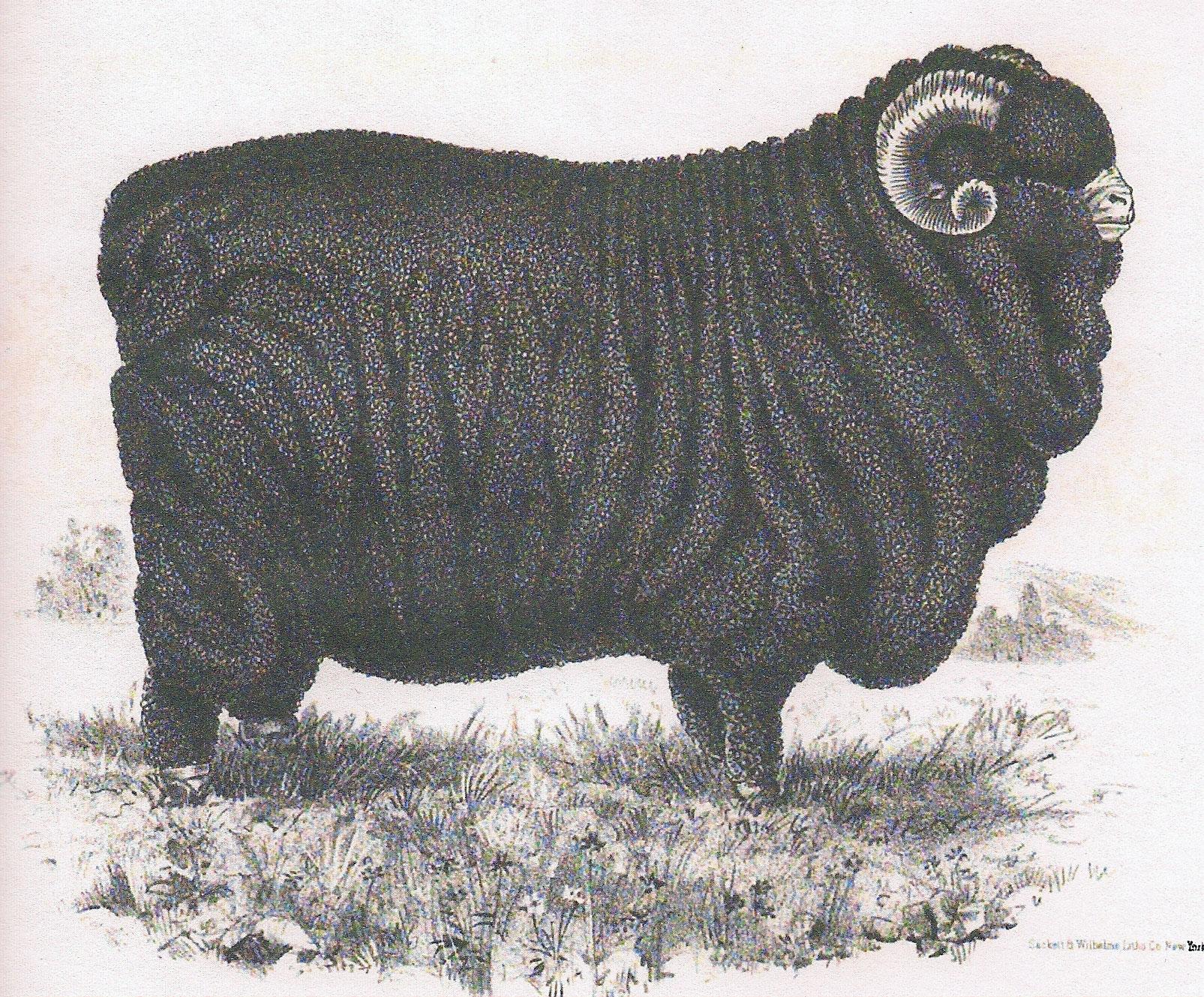 bien-underwear-sheep-premier-large.jpg