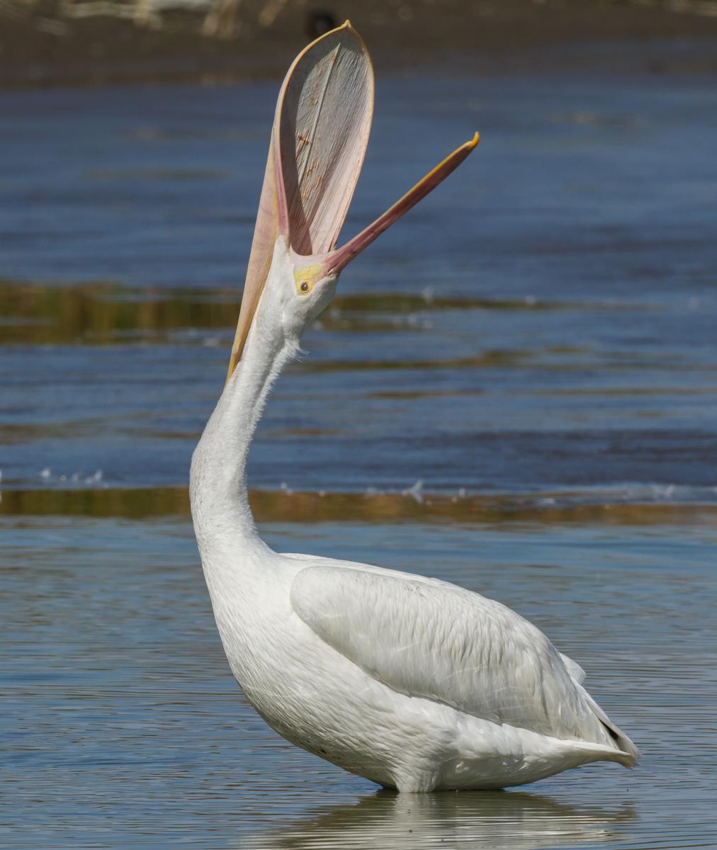 white-pelican-pouch-stretch-vertical.jpg