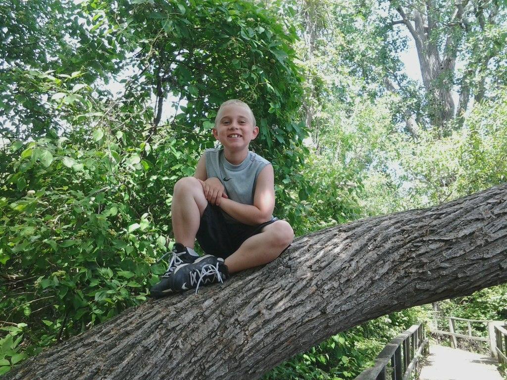 Braedan in tree.jpg