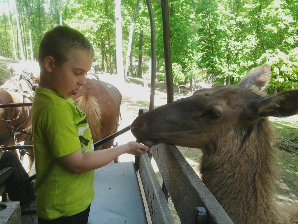 Braedan and Elk (16).jpg
