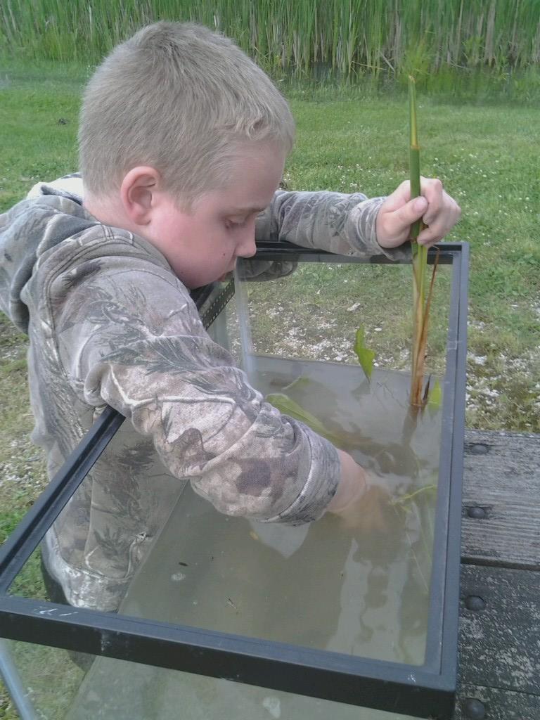 B making a wildlife aquarium.jpg