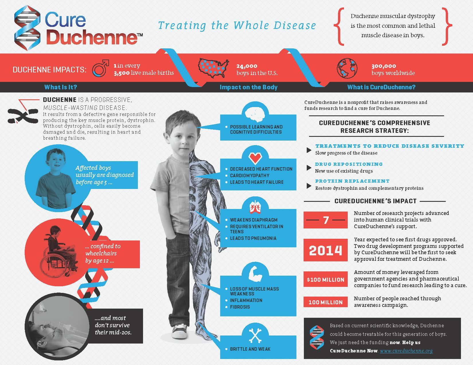 CureDuchenne Infographic-sm.jpg