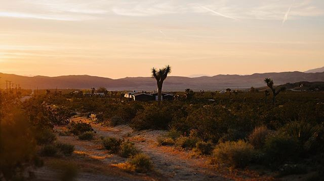 Not getting over this sunrise anytime soon. ✨ #joshuatreenationalpark