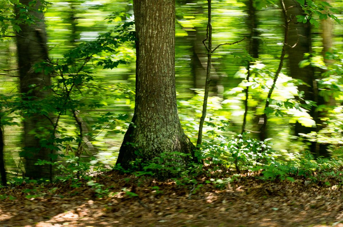 Still Tree