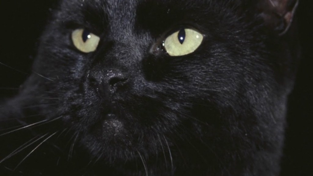 black-cat.jpg