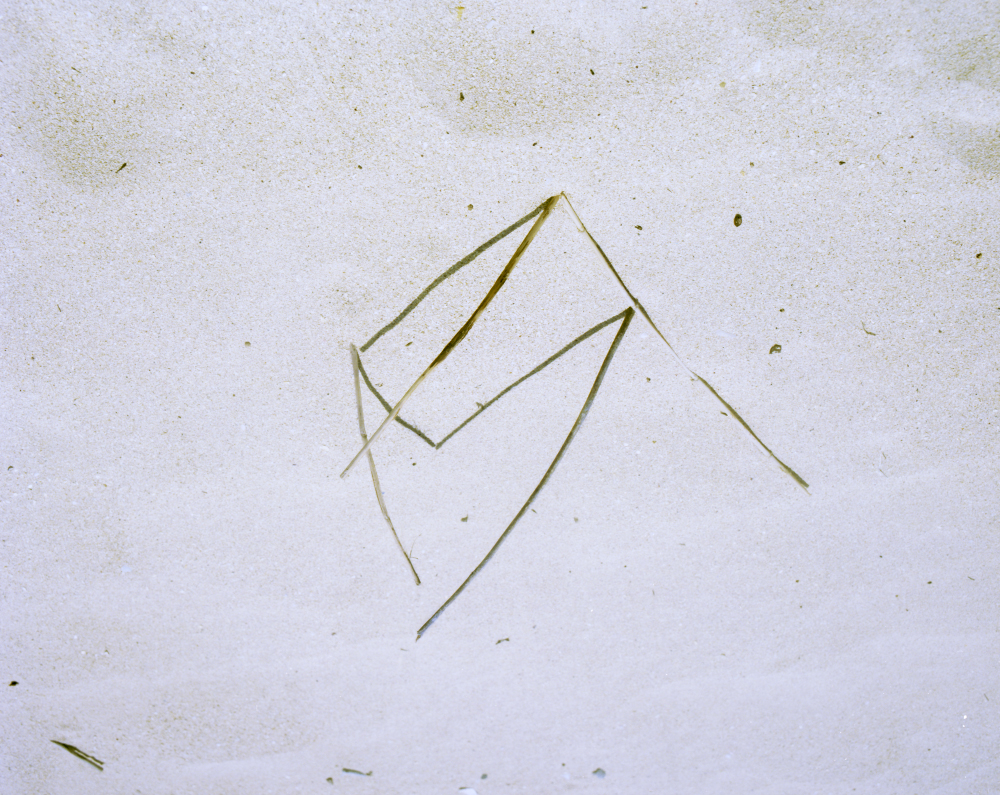 sticks_4_crop_small.jpg