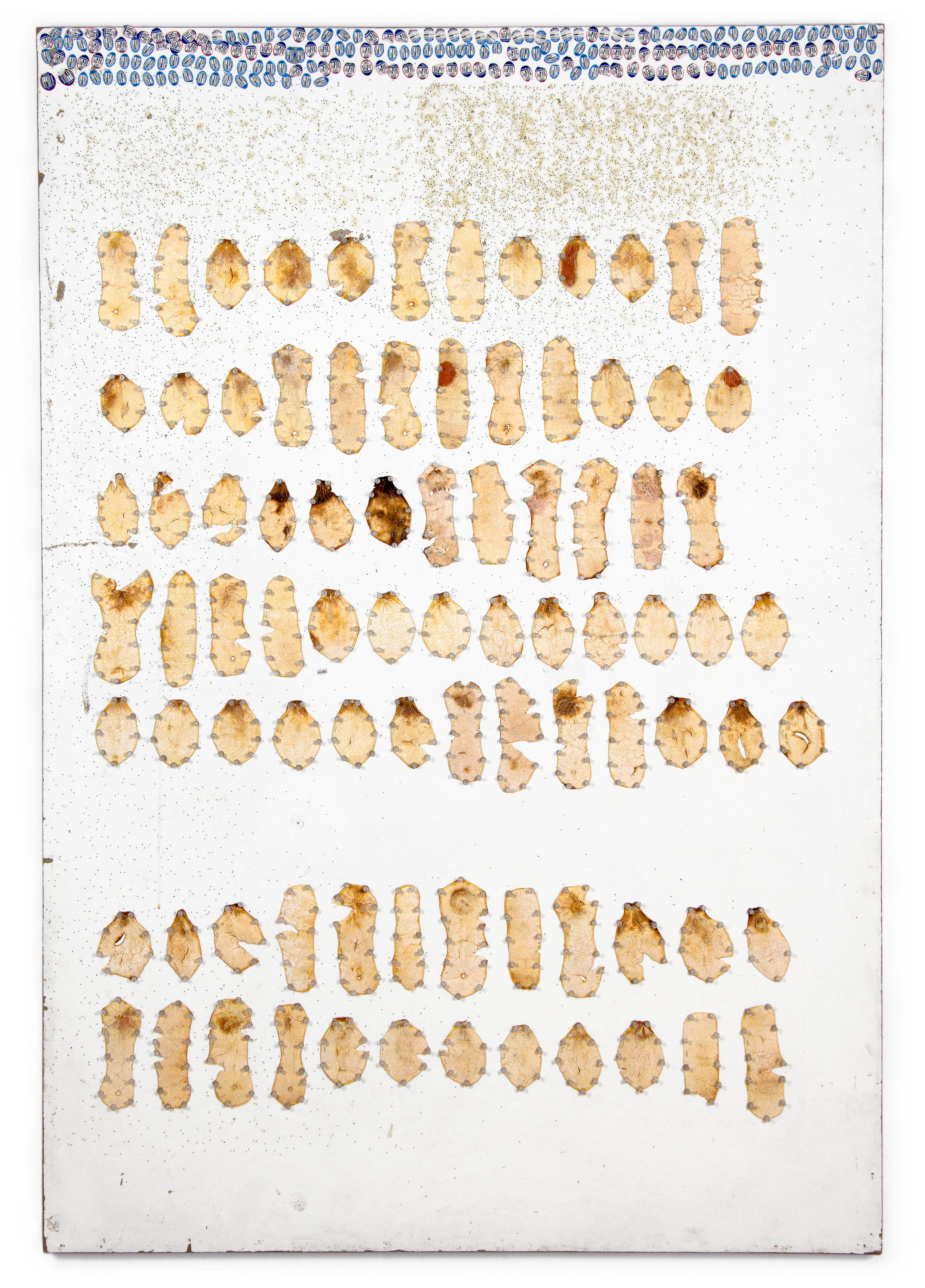 "Peel, Unpeel & Push  (process board), 2015.Tangelo peel and push pins on painted homasote. 72"" x 48"""