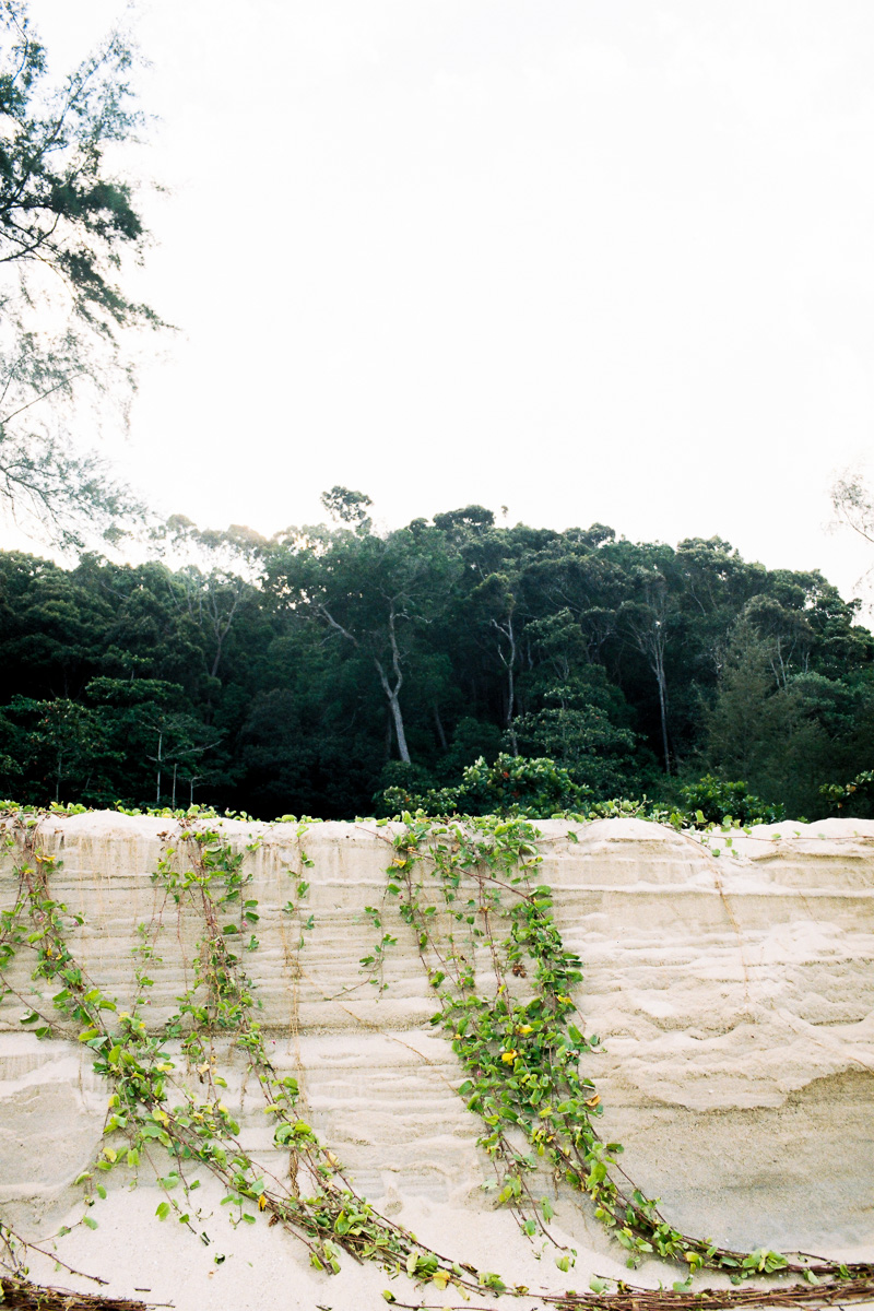 beach vines growing along kuantan beach -35 mm film - kodak gold - kuala lumpur photographer erica knecht