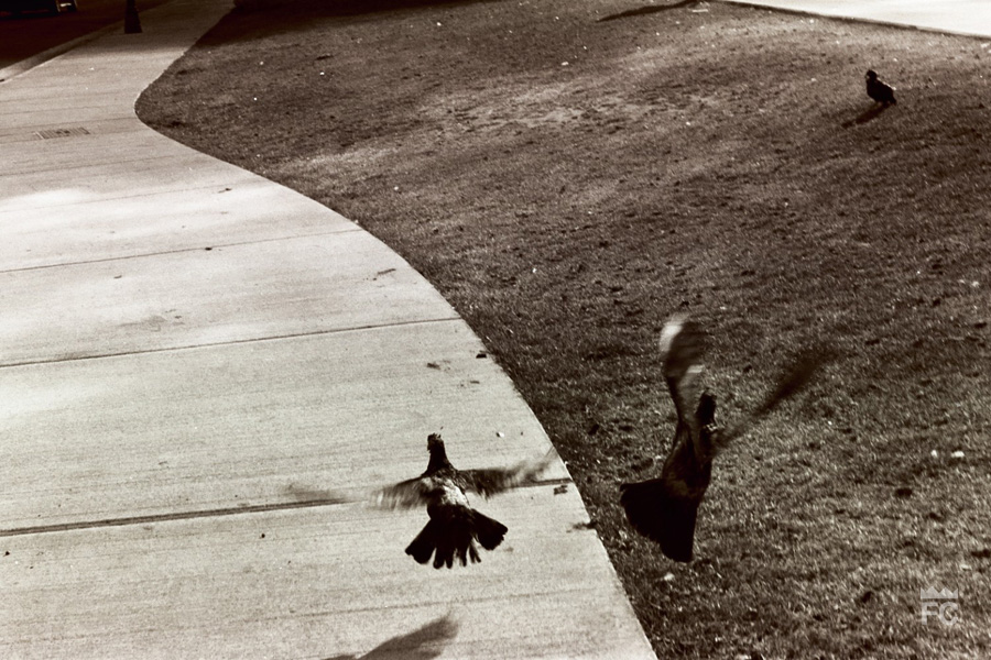 Free-patterns-35mm film   Frankie C