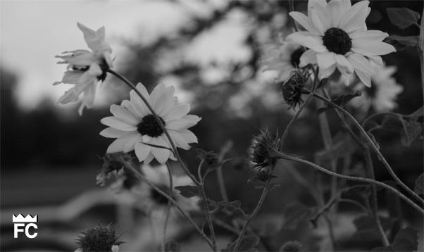 Flower in the summer…