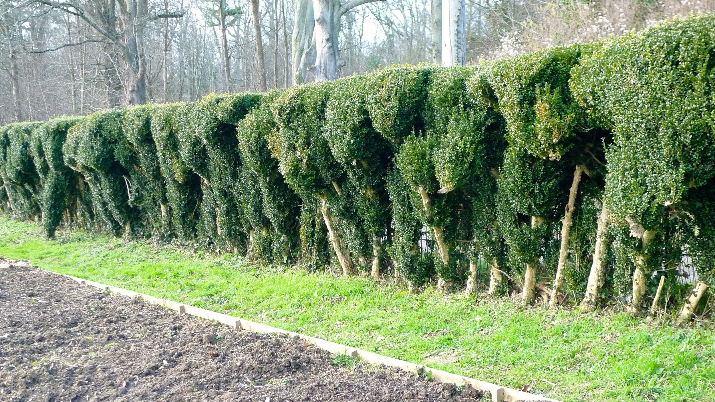 "I'm calling this the ""Ostrich"" hedge!"