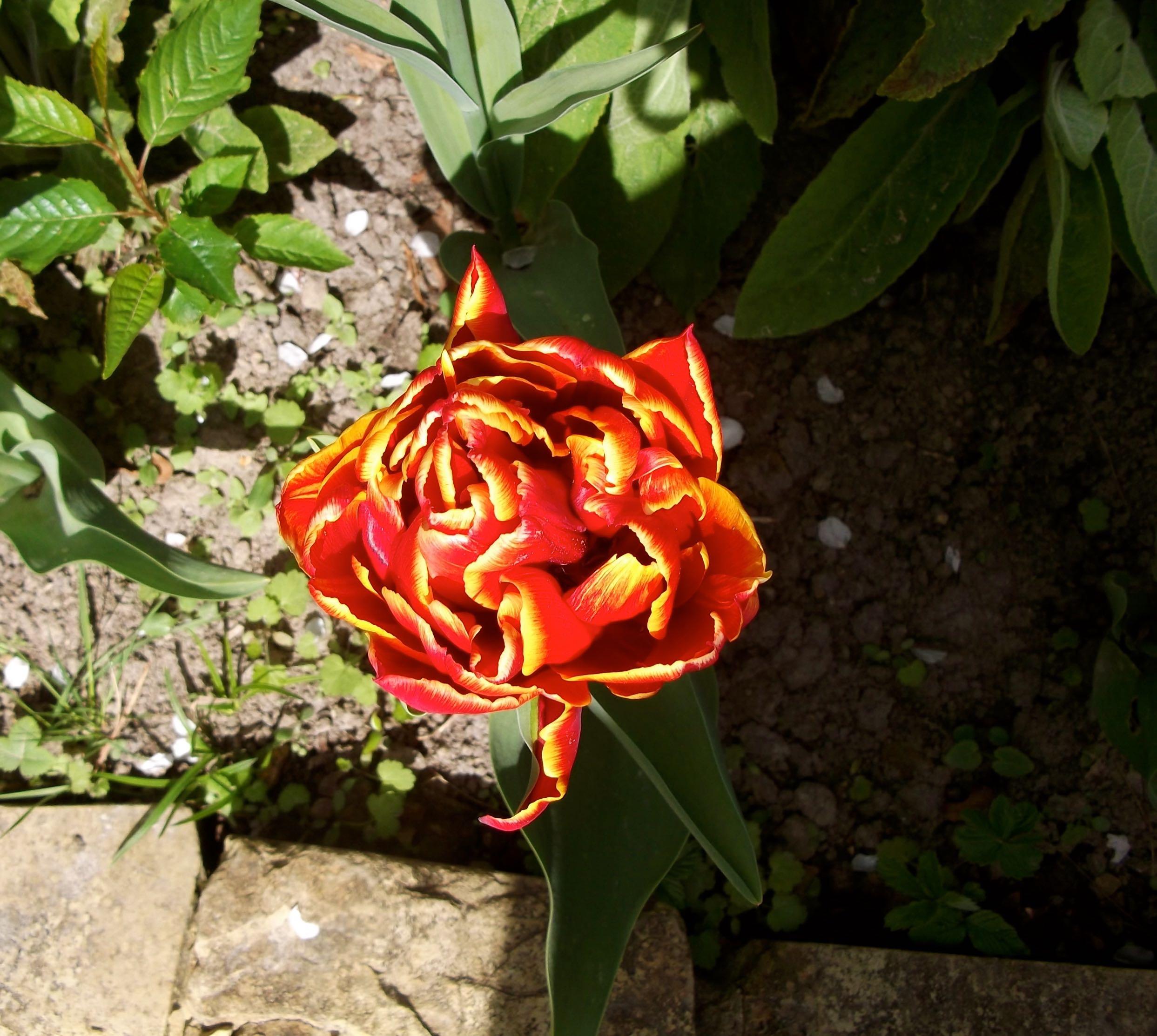 standen_tulip_festival2.jpg