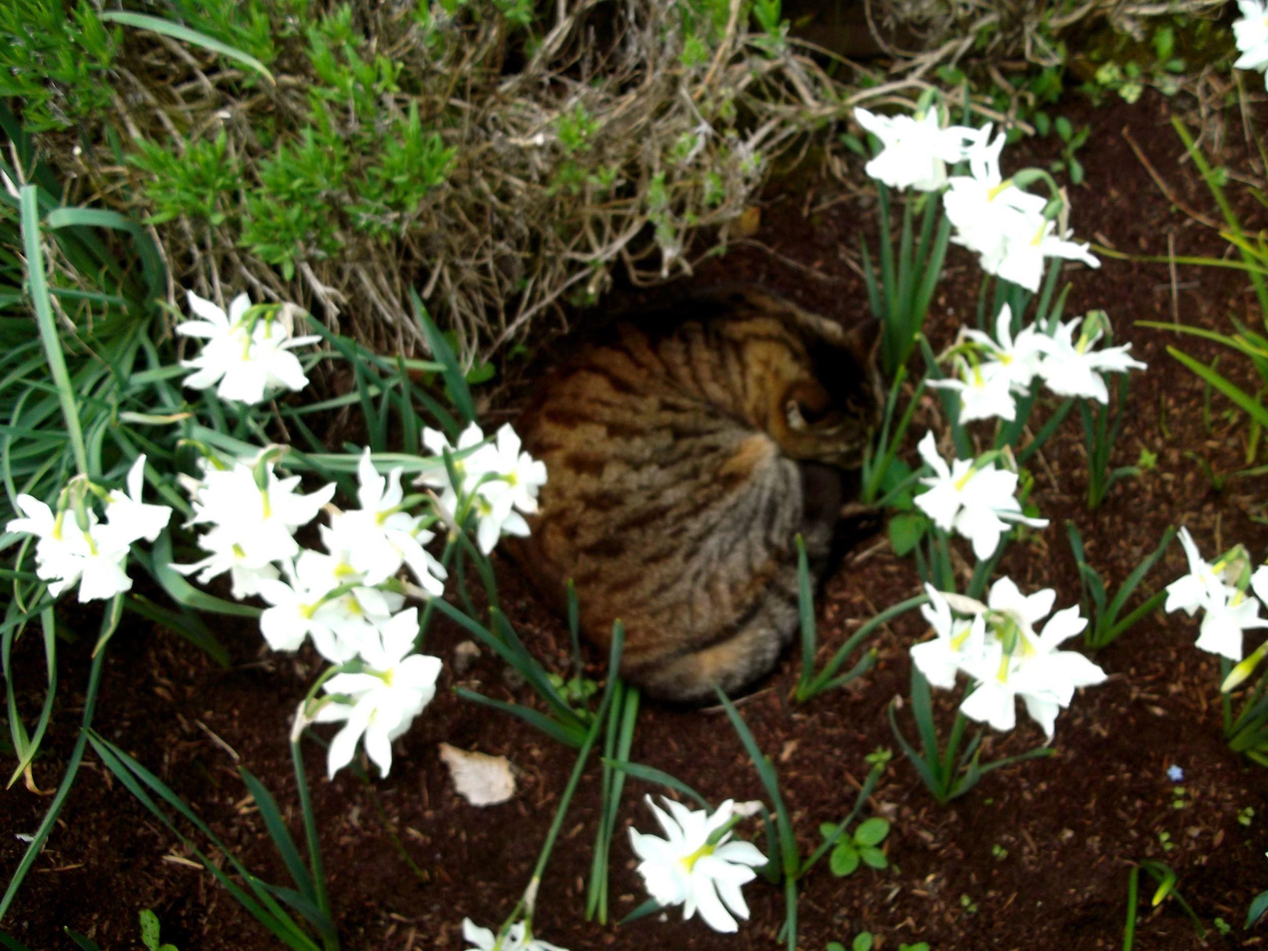 Standen_sleeping_cat.jpg