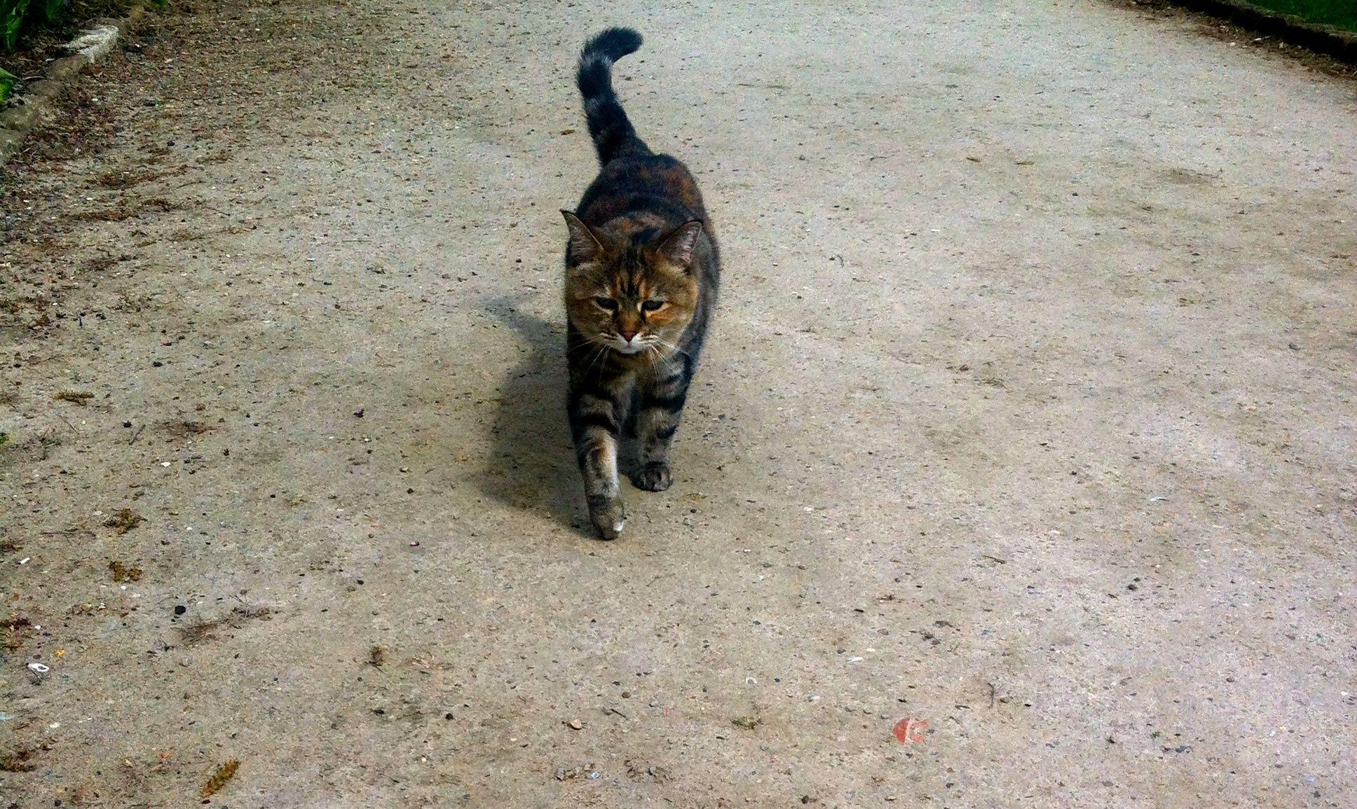 Cat_Standen.jpg