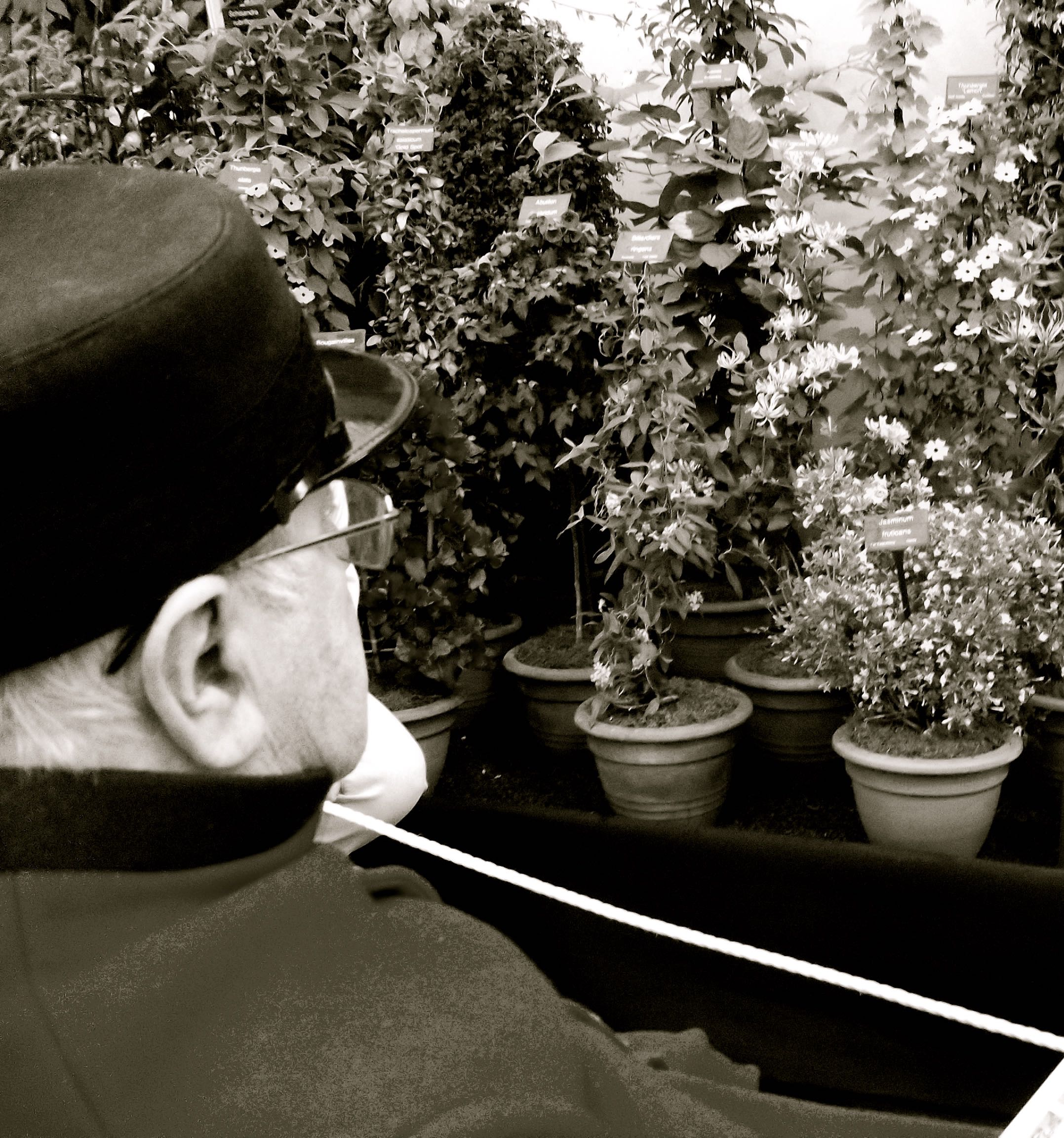 A CHELSEA PENSIONER ADMIRING THE BLOOMS
