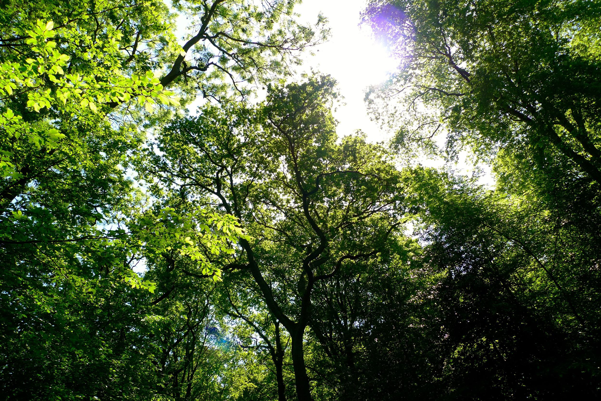 Discovering Epping Forest looking skyward.jpg