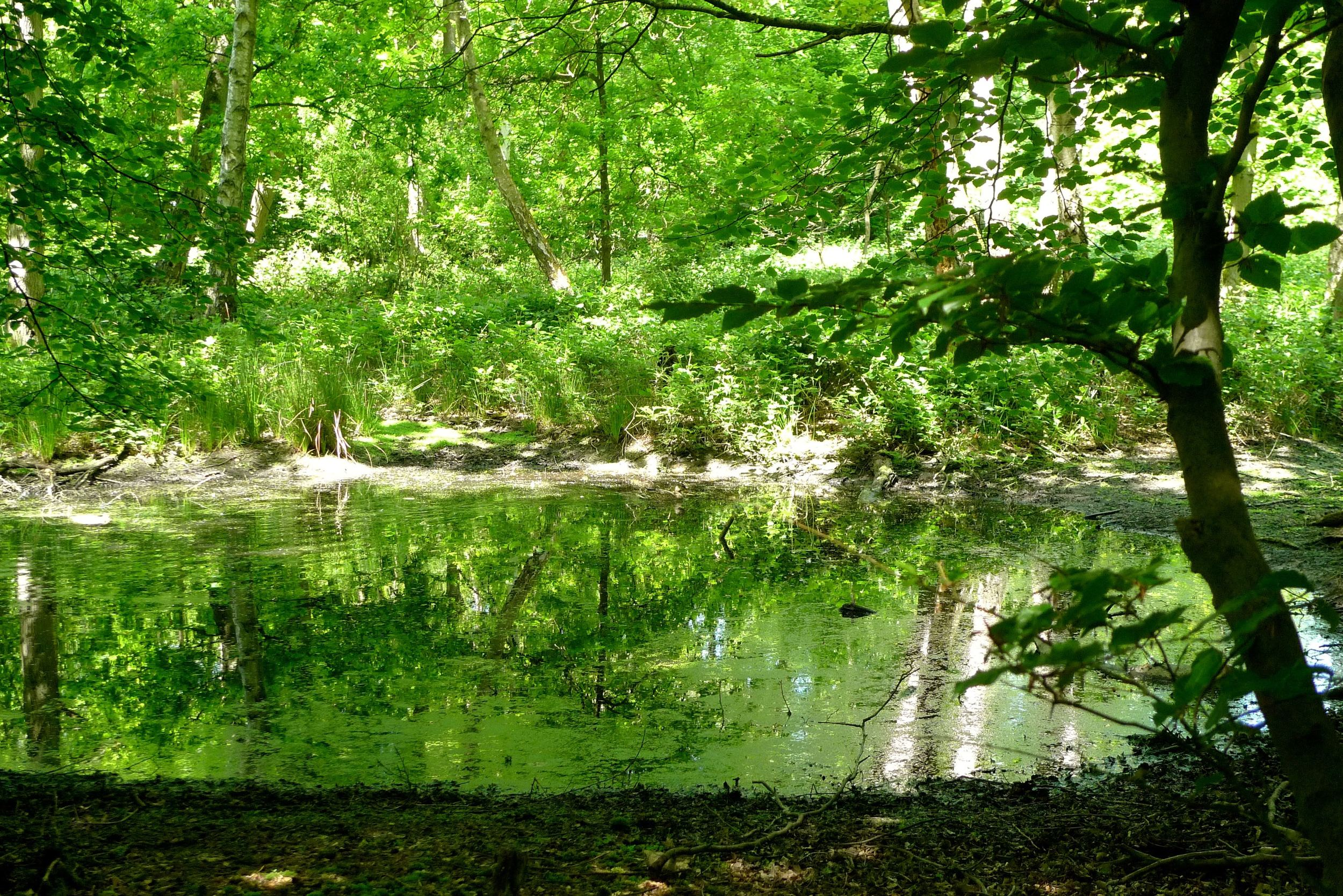 Discovering Epping Forest pond.jpg